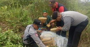 Paket Narkoba yang ditemukan pada ladang warga di Dharmasraya (eko)