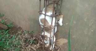 Kucing Terjebak di Tiang Rumah Kosong