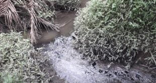Pembuangan limbah cair PT GMP yang menuju aliran anak sungai