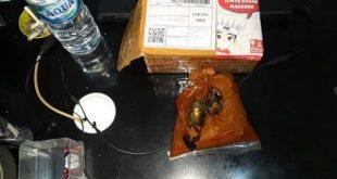 Paket sabu disendupkan dalam rendang kemudian dikirim melalui jasa pengiriman barang