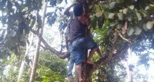 Warga menurunkan seorang pemuda yang gantung diri di pohon duku