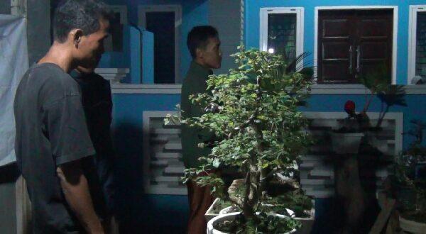 Pameran Bunga Bonsai Pikat Masyarakat Dharmasraya