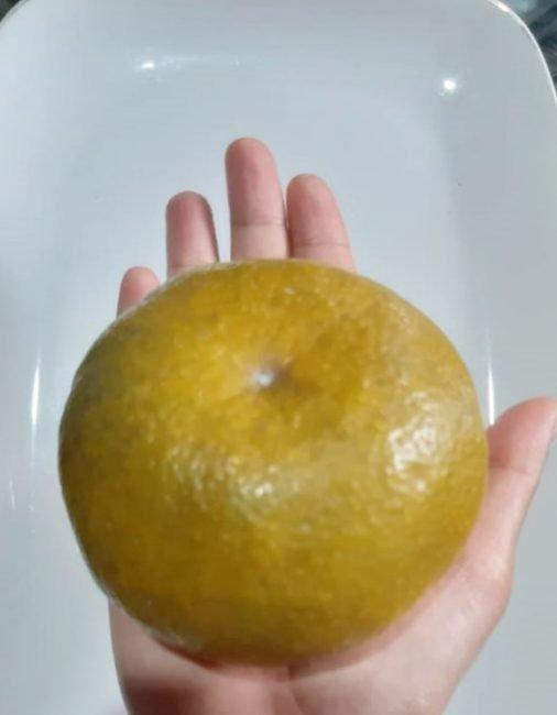 Jeruk girga kerinci dengan keliling lingkaran sekitar 30cm