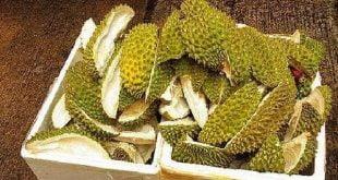 Kulit Durian untuk mengusir tikus