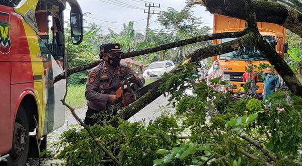 Petugas membersihkan kayu tumbang